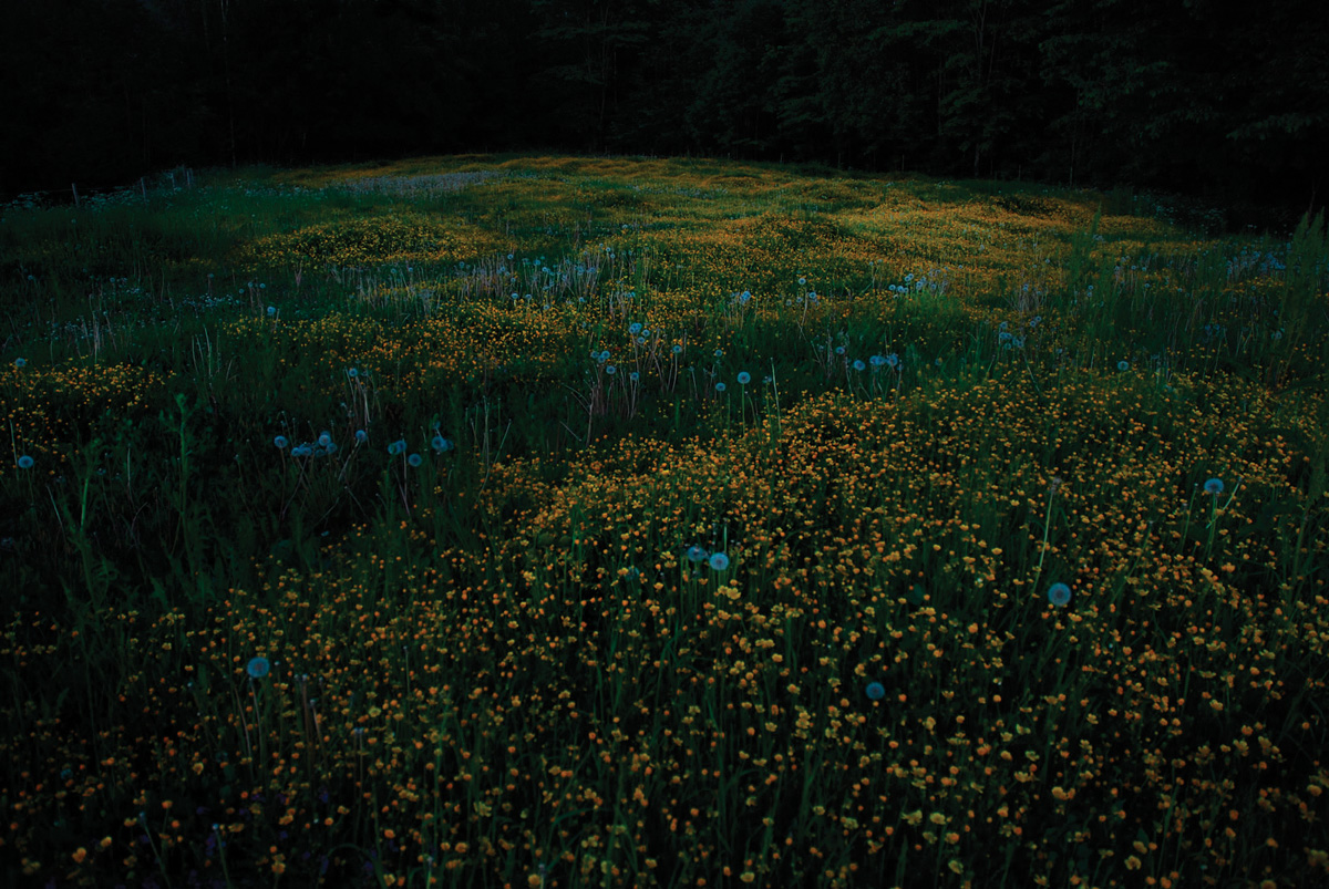 Flowerfield from the series 'Snow Hare; Blood Rabbit', 2008