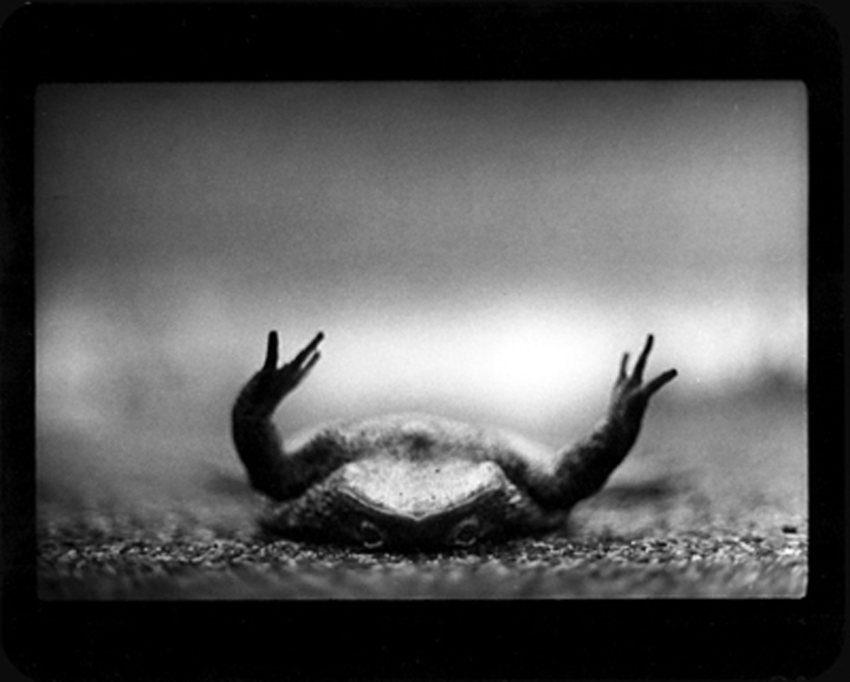 Toad Upside Down