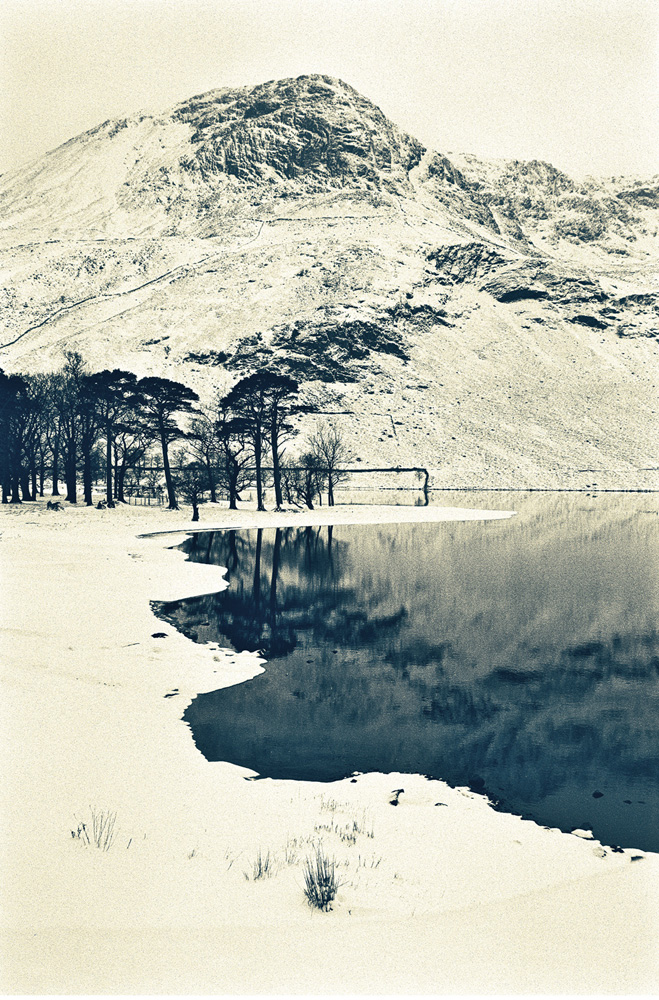 Buttermere Pines, 1996
