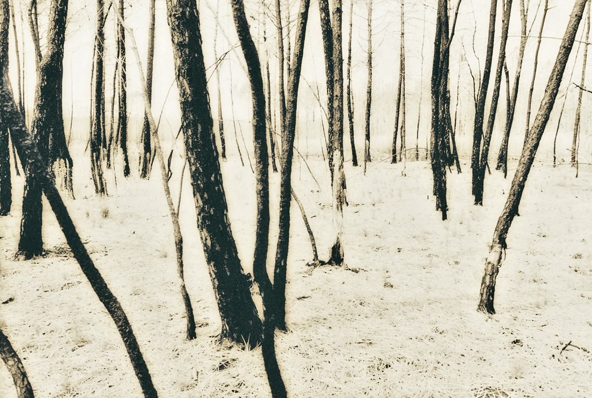 French Trees, 1997
