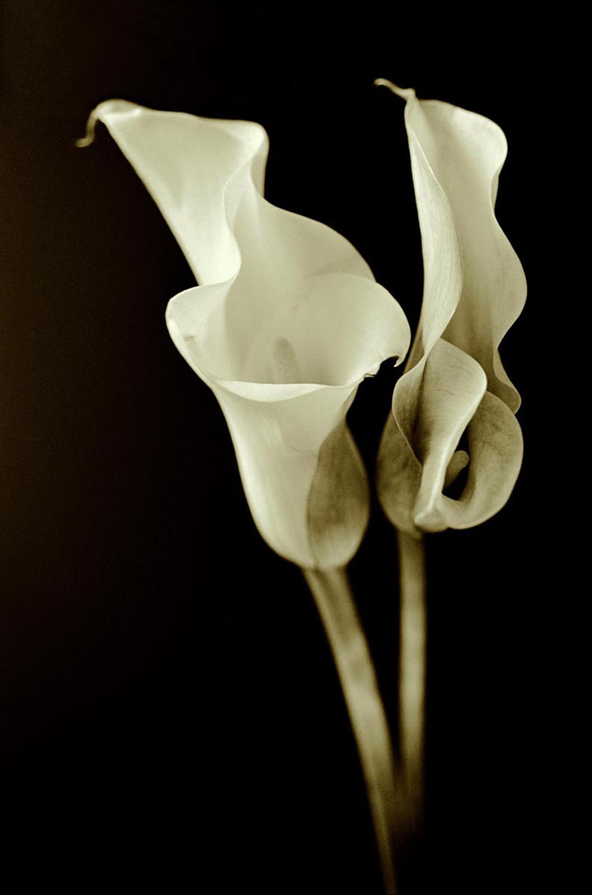 Double Lillies, 2003