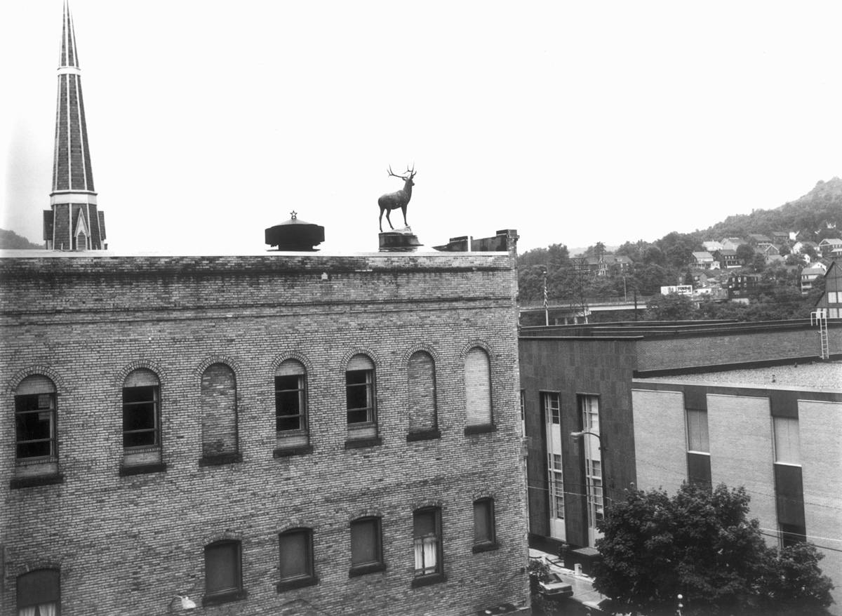Stag on Roof